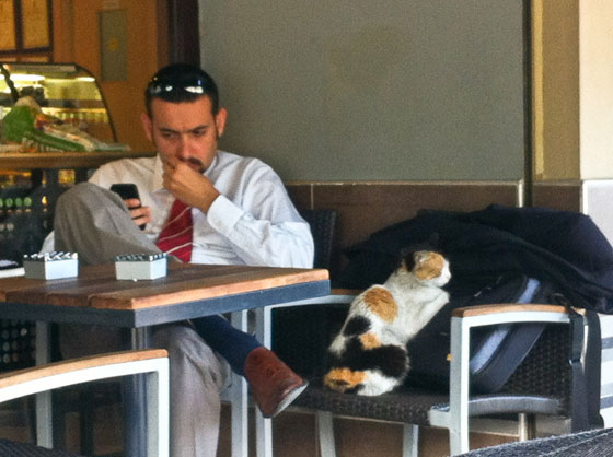 Starbucks man hanging out with a local cat